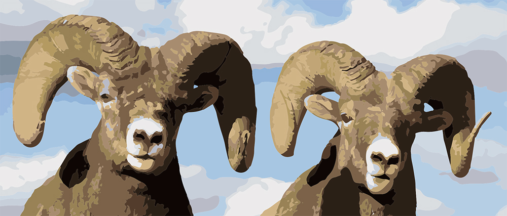 bighorn-sheep-detail